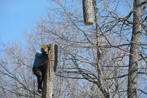 Tree Service in West Michigan