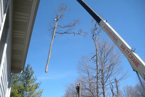 Removing a Large Tree