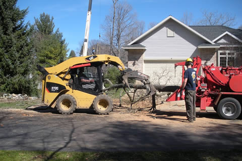 Tree Removal Disposal