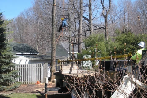 West Olive Tree Services
