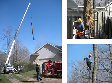 Tree Service Gallery