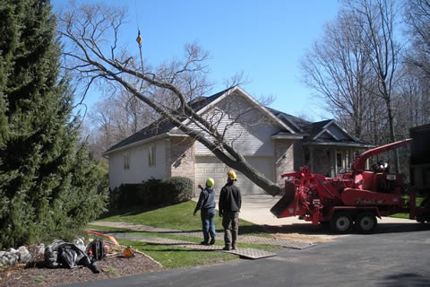 Toads Tree Service of West Michigan