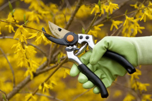 How To Prune Your Trees