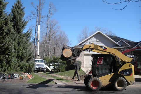 The West Michigan Tree Service Experts!